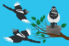 Magpies Royalty Free Stock Image