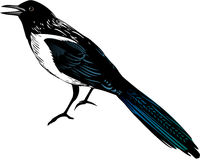 Magpies Royalty Free Stock Photography
