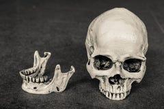 magro del cráneo del ีHuman del ‡ del ¹ del à en fondo del tablero de madera Fotografía de archivo
