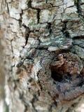 Magro schließen herauf Ansicht eines Baumstammes Lizenzfreies Stockfoto
