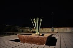 Maguey`en s garden5 Royaltyfri Fotografi