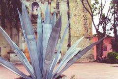 Magueyinstallatie buiten Onze Dame van de tempel van La Merced in Oaxaca Mexi stock afbeeldingen
