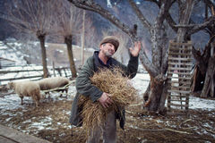 MAGURA, ROMANIA - 05 FEB: Old romanian peasant preparing to give food to farm animals on February 05 2015. Magura is a village Stock Photo