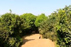 Mahabaleshwar Lizenzfreies Stockbild