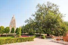 Mahabodhi寺庙, Bodhgaya 库存照片