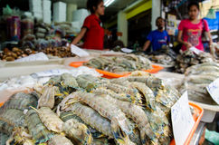 Mahachai, Thailand : Mantis shrimp in the market Royalty Free Stock Photos