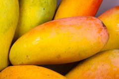 Mahachanok / Rainbow Mango fruit Thailand. Another mango fruit is delicious. And in Thailand Stock Images