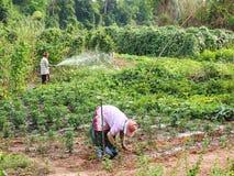 MAHASARAKHAM 28 THAILAND-APRIL: landbouwlevensstijl, vegetabl Royalty-vrije Stock Fotografie