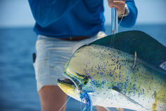 Mahi Dolphin Stock Images
