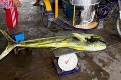 Mahi-mahi海豚鱼在圣克鲁斯公开市场,明多罗,菲律宾上卖了 库存图片