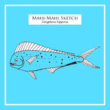 Mahi-Mahi sketch Royalty Free Stock Photography