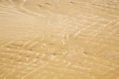 Mahnen Sie im nassen Sandstrand der Afrika-Braunküstenlinie Lizenzfreies Stockfoto