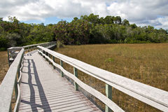 Mahogany Hammock Trail Royalty Free Stock Images
