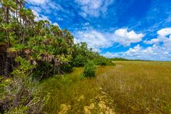 Mahogany Hammock Trail of the Everglades National Park. Boardwalks in the swamp. Florida, USA stock photography