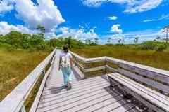 Mahogany Hammock Trail of the Everglades National Park. Boardwalks in the swamp. Florida, USA stock photos