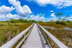 Mahogany Hammock Trail of the Everglades National Park. Boardwalks in the swamp. Florida, USA royalty free stock photo
