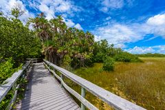 Mahogany Hammock Trail of the Everglades National Park. Boardwalks in the swamp. Florida, USA royalty free stock images