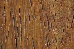mahoniowy zbożowy drewna Fotografia Stock