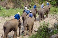 Mahoots en Olifanten Stock Afbeeldingen