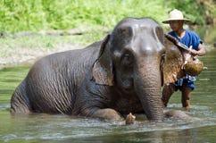 Mahoots i słonie Zdjęcia Royalty Free