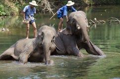 Mahoots und Elefanten Lizenzfreie Stockbilder