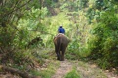 Mahoots y elefantes Imagenes de archivo
