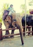 Mahout和大象在大象徒步旅行队停放,巴厘岛 库存照片