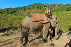 Mahout Royalty Free Stock Images