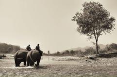 mahout Imagen de archivo libre de regalías