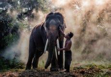 mahout Stockfotos