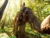 mahout zdjęcie stock