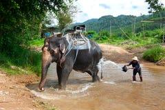 mahout lizenzfreies stockfoto