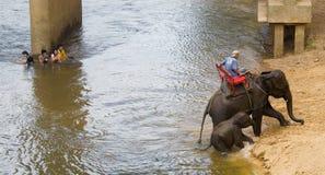mahout Imágenes de archivo libres de regalías