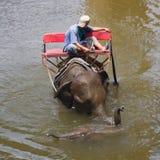 mahout στοκ φωτογραφίες