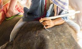 mahout Fotografering för Bildbyråer