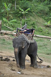 The mahout asleep on his elephant during in Thailand Stock Photo