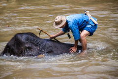 Mahout baths his elephant Stock Images