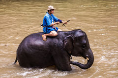 Mahout baths his elephant Stock Photos