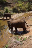 Mahout brings his elephant down to the water Stock Photo