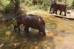 Mahout brings his elephant to the river Stock Image