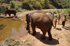 Mahout brings his elephant to the river Royalty Free Stock Photos