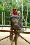 A mahout in charge of elephant waiting for passengers  at the Siam Safari Elephant Camp in Phuket, Thailand Stock Photo