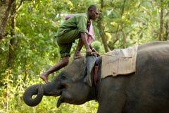 Mahout climbing elephant Stock Photography
