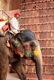 Mahout on decorated elephant entering Suraj Pol Sun Gate to Ja. Leb Chowk in Amber Fort, Rajasthan, India. Elephant rides are popular tourist attraction in Amber Royalty Free Stock Photography