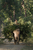 Mahout, der inländischen Elefanten im Nepalidschungel reitet Stockbild
