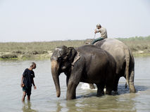 Mahout and Elephant Royalty Free Stock Image