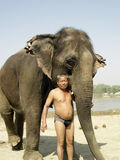 Mahout with Elephant Stock Photo