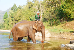 Mahout and elephant royalty free stock images