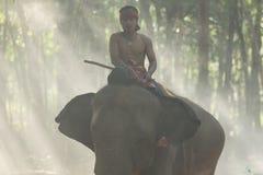 Mahout on elephant back Stock Photos
