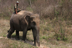 Mahout and elephant at Chitwan Royalty Free Stock Image